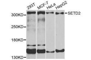 Image no. 2 for anti-SET Domain Containing 2 (SETD2) antibody (ABIN1682666)