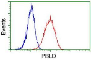 Image no. 3 for anti-Phenazine Biosynthesis-Like Protein Domain Containing 1 (PBLD1) antibody (ABIN2725566)