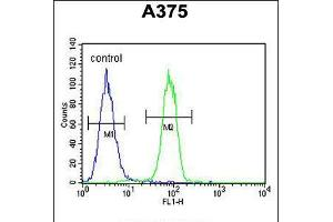 Image no. 3 for anti-Endothelin-Converting Enzyme 1 (ECE1) (AA 528-556), (C-Term) antibody (ABIN5534226)