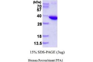 Image no. 1 for Pyrophosphatase (Inorganic) 1 (PPA1) (AA 1-289) (Active) protein (His tag) (ABIN1981668)