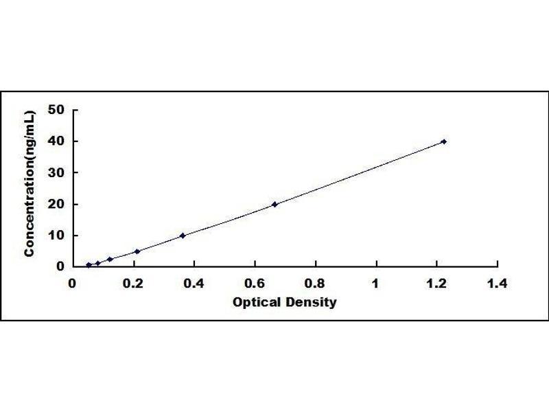 5-Methyltetrahydrofolate-Homocysteine Methyltransferase (MTR) ELISA Kit