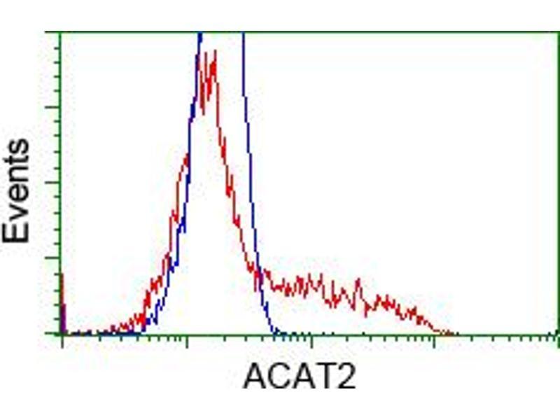 Image no. 8 for anti-Acetyl-CoA Acetyltransferase 2 (ACAT2) antibody (ABIN1496403)