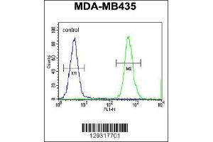 Image no. 3 for anti-Heterogeneous Nuclear Ribonucleoprotein C-Like 1 (HNRNPCL1) (AA 252-281), (C-Term) antibody (ABIN655435)