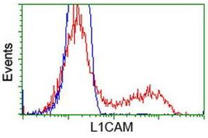Image no. 3 for anti-L1 Cell Adhesion Molecule (L1CAM) antibody (ABIN1499086)
