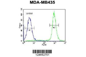 Flow Cytometry (FACS) image for anti-Inhibitor of Bruton Agammaglobulinemia Tyrosine Kinase (IBTK) (AA 586-613), (Center) antibody (ABIN654688)