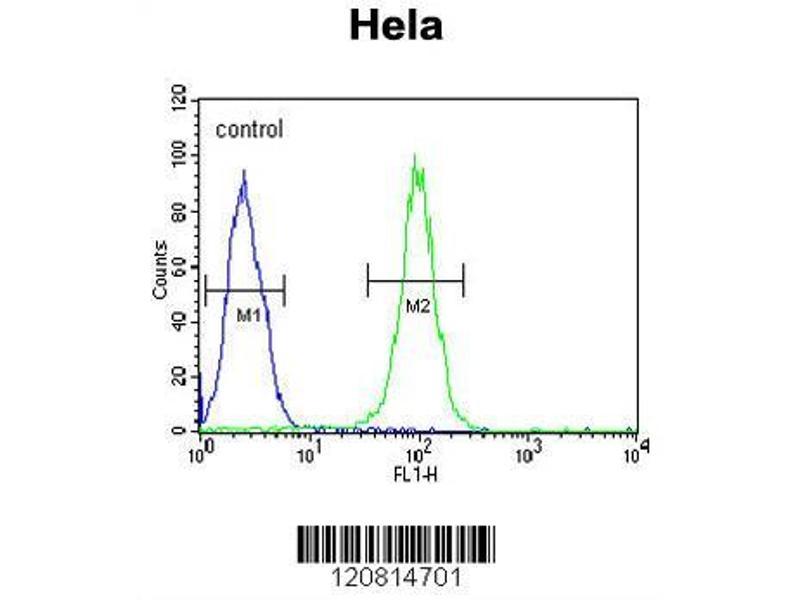 Flow Cytometry (FACS) image for anti-Heat Shock 70kDa Protein 5 (Glucose-Regulated Protein, 78kDa) (HSPA5) (AA 541-568), (C-Term) antibody (ABIN651231)
