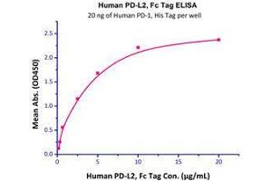 Image no. 3 for Programmed Cell Death 1 Ligand 2 (PDCD1LG2) (AA 20-219) (Active) protein (Fc Tag) (ABIN2749238)