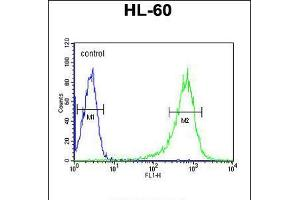 Image no. 1 for anti-Regulator of G-Protein Signaling 1 (RGS1) (AA 19-45), (N-Term) antibody (ABIN5536547)