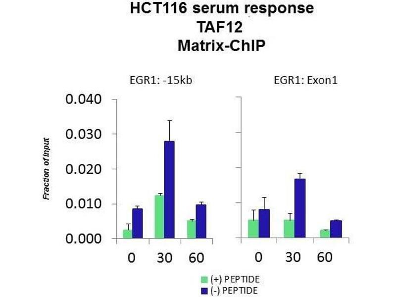 Chromatin Immunoprecipitation (ChIP) image for anti-TAF12 RNA Polymerase II, TATA Box Binding Protein (TBP)-Associated Factor, 20kDa (TAF12) (N-Term) antibody (ABIN2792680)
