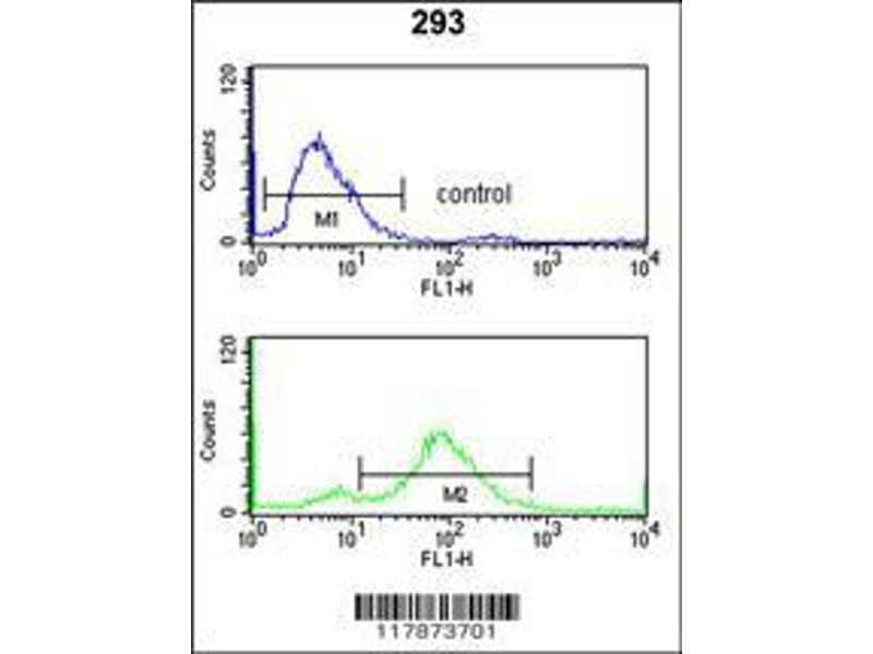 Flow Cytometry (FACS) image for anti-Transportin 1 antibody (TNPO1) (AA 47-74) (ABIN650673)