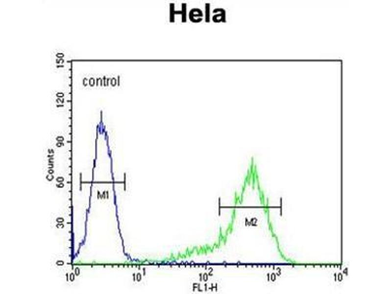 Flow Cytometry (FACS) image for anti-Angiopoietin 4 (ANGPT4) (AA 19-52), (N-Term) antibody (ABIN950413)