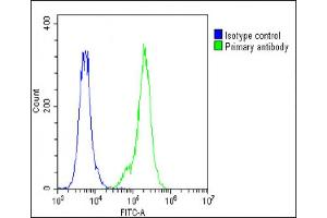 Image no. 2 for anti-Surfactant Protein C (SFTPC) (AA 1-30), (N-Term) antibody (ABIN656267)