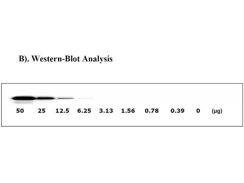 Met Proto-Oncogene (MET) ELISA Kit (5)