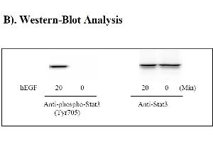 Image no. 4 for Signal Transducer and Activator of Transcription 3 (Acute-Phase Response Factor) (STAT3) ELISA Kit (ABIN625245)