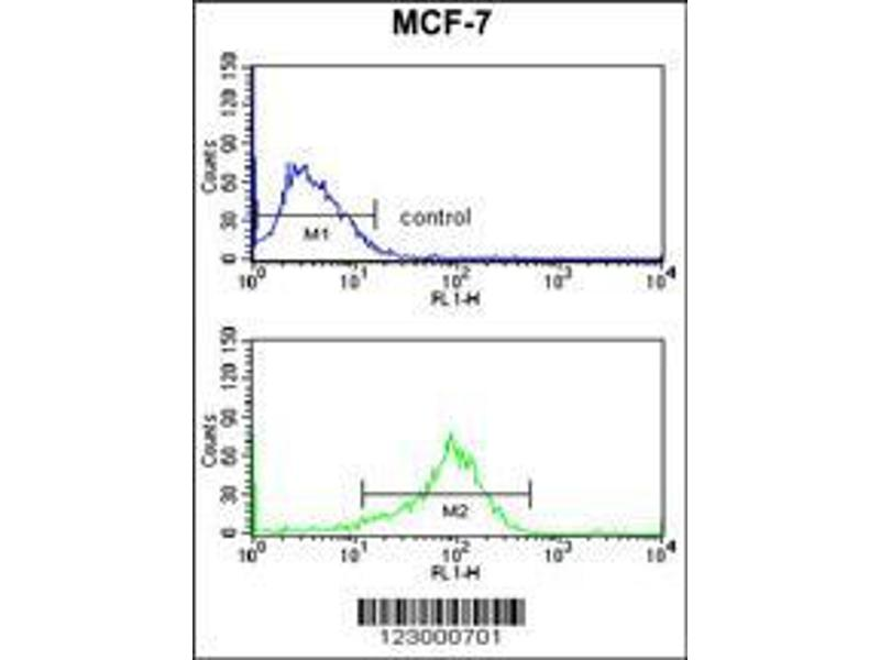 Flow Cytometry (FACS) image for anti-Mitogen-Activated Protein Kinase 8 Interacting Protein 1 (MAPK8IP1) (AA 470-498), (C-Term) antibody (ABIN652961)