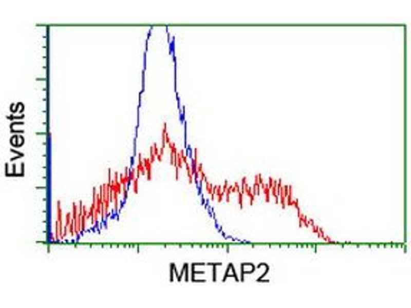 image for anti-Methionyl Aminopeptidase 2 (METAP2) (AA 2-212) antibody (ABIN1491153)