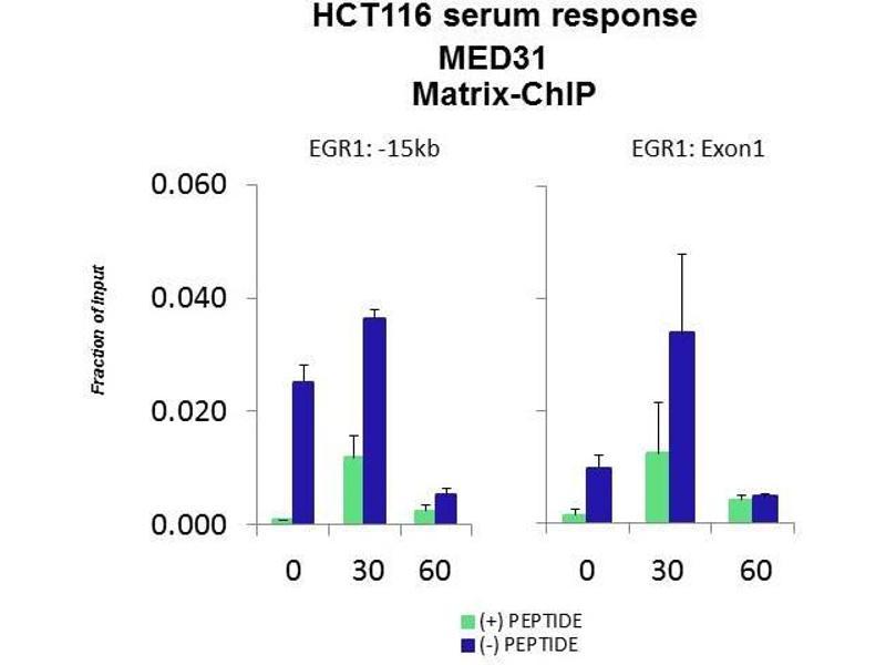 Chromatin Immunoprecipitation (ChIP) image for anti-Mediator Complex Subunit 31 (MED31) (N-Term) antibody (ABIN2786919)