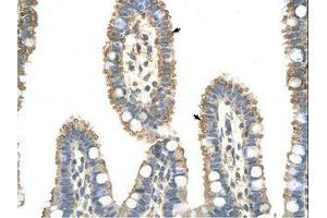 Image no. 1 for anti-Anaphase Promoting Complex Subunit 7 (ANAPC7) (C-Term) antibody (ABIN6736333)