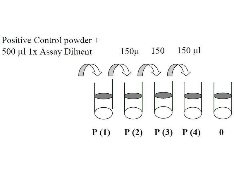 image for V-Akt Murine Thymoma Viral Oncogene Homolog 1 (AKT1) ELISA Kit (ABIN625233)