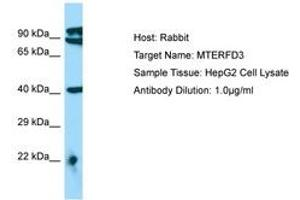 Image no. 1 for anti-MTERF Domain Containing 3 (MTERFD3) (AA 110-159) antibody (ABIN6750118)
