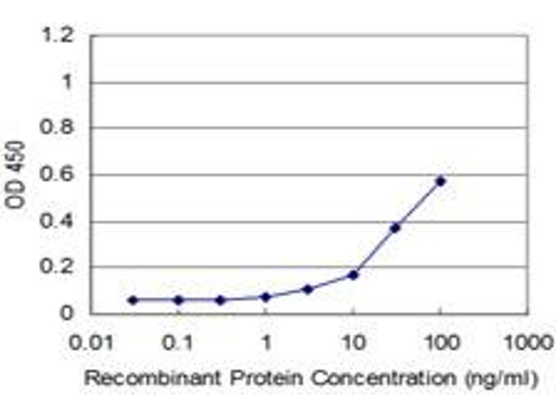 ELISA image for anti-RHOA antibody (Ras Homolog Gene Family, Member A) (AA 1-193) (ABIN559931)