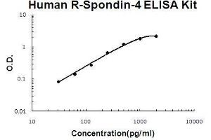 Image no. 1 for R-Spondin 4 (RSPO4) ELISA Kit (ABIN5510660)