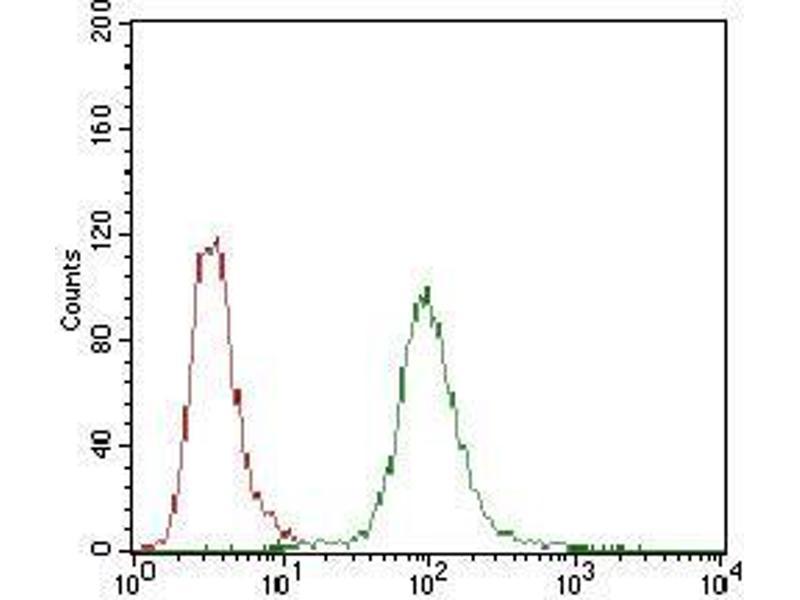 Image no. 3 for anti-Protein Phosphatase 1, Regulatory (Inhibitor) Subunit 1B (PPP1R1B) (AA 95-204) antibody (ABIN1724929)