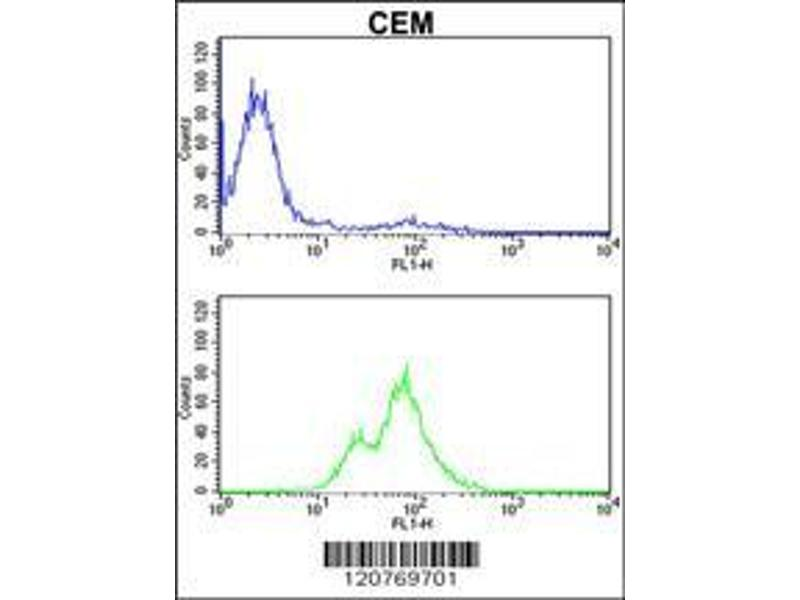 Flow Cytometry (FACS) image for anti-PKC alpha antibody (Protein Kinase C, alpha) (AA 75-103) (ABIN652517)