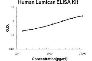 Image no. 1 for Lumican (LUM) ELISA Kit (ABIN1889401)