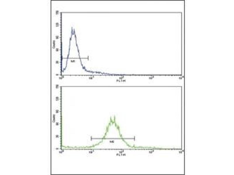 Flow Cytometry (FACS) image for anti-Paired Box 8 (PAX8) (AA 285-313) antibody (ABIN3032136)