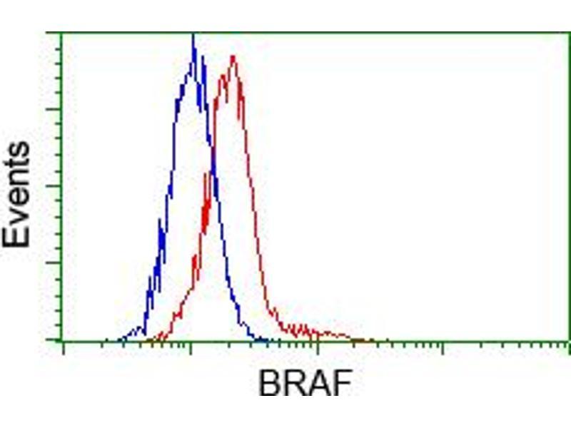 Flow Cytometry (FACS) image for anti-BRAF antibody (V-Raf Murine Sarcoma Viral Oncogene Homolog B1) (ABIN2452815)