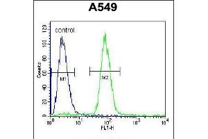 Image no. 2 for anti-SRY (Sex Determining Region Y)-Box 3 (SOX3) (AA 189-218) antibody (ABIN5535010)
