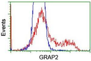 Flow Cytometry (FACS) image for anti-GRB2-Related Adaptor Protein 2 (GRAP2) antibody (ABIN2454589)