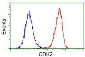 Flow Cytometry (FACS) image for anti-Cyclin-Dependent Kinase 2 (CDK2) antibody (ABIN4297029)