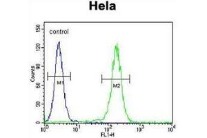 Flow Cytometry (FACS) image for anti-Leucyl-tRNA Synthetase (LARS) (AA 183-213), (N-Term) antibody (ABIN953139)