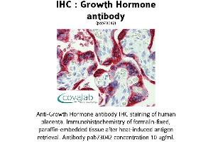 image for anti-Growth Hormone 1 (GH1) (AA 1-217) antibody (ABIN1735291)