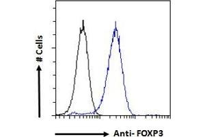 Image no. 2 for anti-Forkhead Box P3 (FOXP3) (C-Term) antibody (ABIN185239)