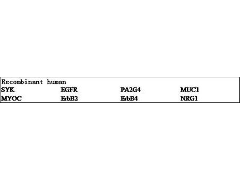 ELISA image for V-Erb-B2 Erythroblastic Leukemia Viral Oncogene Homolog 3 (Avian) (ERBB3) ELISA Kit (ABIN2691118)