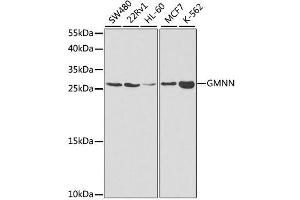 Image no. 1 for anti-Geminin, DNA Replication Inhibitor (GMNN) antibody (ABIN6141186)