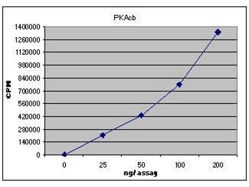 Activity Assay (AcA) image for PKAcb (Active) protein (ABIN411951)