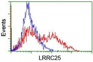 Image no. 1 for anti-Leucine Rich Repeat Containing 25 (LRRC25) antibody (ABIN2724901)