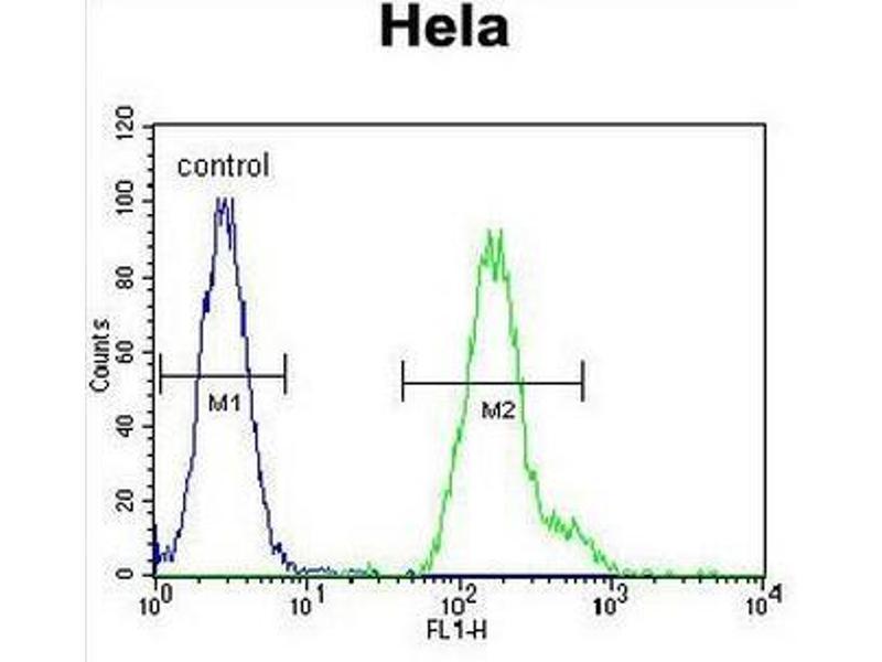 Flow Cytometry (FACS) image for anti-CCAAT/enhancer Binding Protein (C/EBP), alpha (CEBPA) (AA 310-339), (C-Term) antibody (ABIN951460)