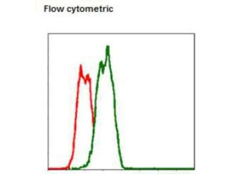 Flow Cytometry (FACS) image for anti-FASL antibody (Fas Ligand (TNF Superfamily, Member 6)) (ABIN4271438)