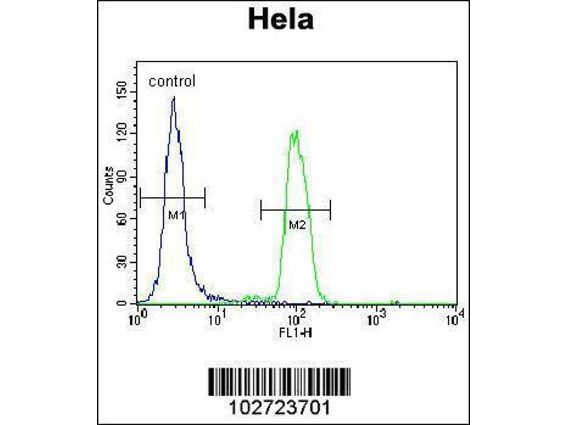 Flow Cytometry (FACS) image for anti-Mitogen-Activated Protein Kinase 14 (MAPK14) (AA 295-324), (C-Term) antibody (ABIN1882176)