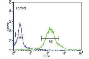 Image no. 1 for anti-G-2 and S-Phase Expressed 1 (GTSE1) antibody (ABIN3004360)