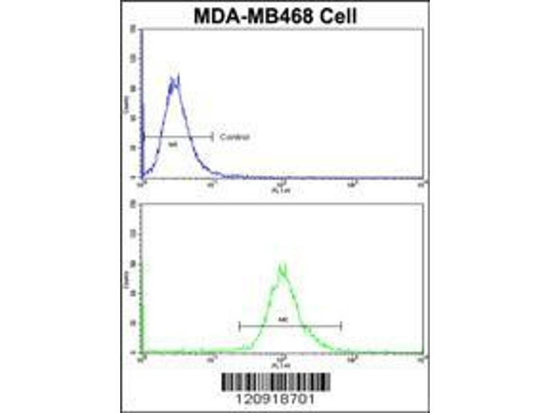 Flow Cytometry (FACS) image for anti-Aminoacylase 2 (ACY2) (AA 82-110), (N-Term) antibody (ABIN390843)