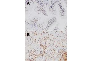image for anti-Toll-Like Receptor 4 (TLR4) (AA 418-435) antibody (ABIN208630)