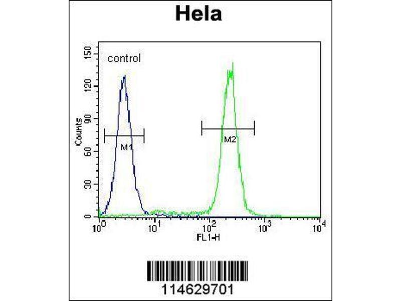 Flow Cytometry (FACS) image for anti-KDM3B antibody (Lysine (K)-Specific Demethylase 3B) (AA 1328-1358) (ABIN655393)