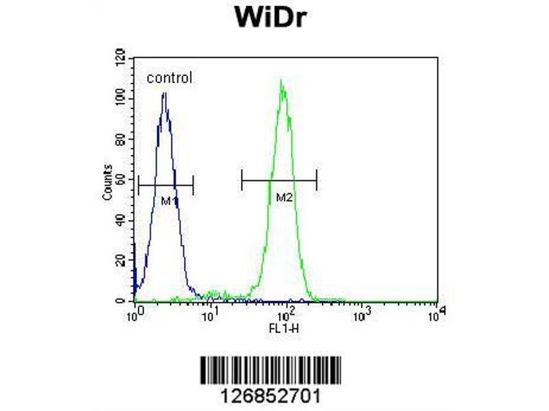 Flow Cytometry (FACS) image for anti-F-Box Protein 9 (FBXO9) (AA 346-373), (C-Term) antibody (ABIN651752)
