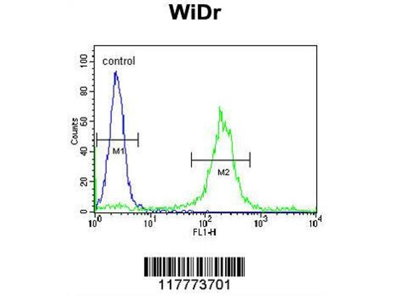 Flow Cytometry (FACS) image for anti-ADAM19 antibody (ADAM Metallopeptidase Domain 19) (AA 207-236) (ABIN653772)